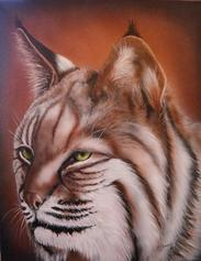 Bob Cat acrylic painting for Maine Inland Fisheries and Wildlife