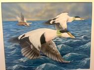 Common Eiders, acrylic