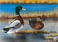 mallards, maine state duck stamp for 2009