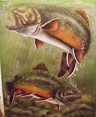 Air Brushed painting of feeding brook trout