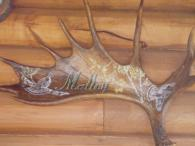 Moose antler carved and painted