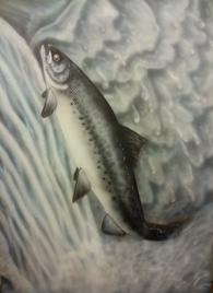 """Survivor"" Salmon painting"
