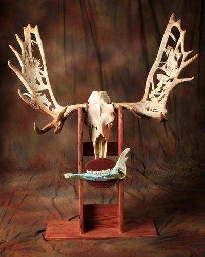 Carved moose antler european mount
